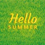 绿草你好夏天背景 库存照片