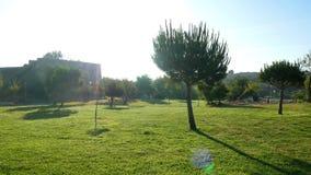 草公园自然树 影视素材