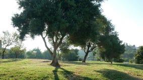 草公园自然树 股票视频