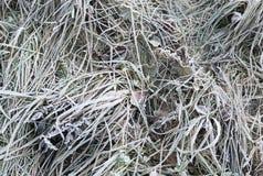 草分层了堆积与在冬时的冰晶 免版税图库摄影