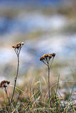 草分层了堆积与在冬时的冰晶 库存照片