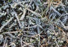 草分层了堆积与在冬时的冰晶 免版税库存图片