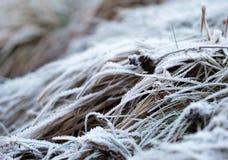 草分层了堆积与在冬时的冰晶 免版税库存照片
