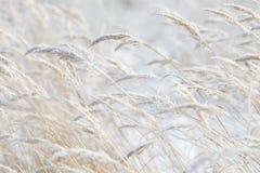 草分支冻在冰 冻结的草分支在冬天 分行包括雪 免版税库存照片
