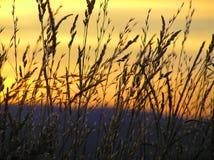 草剪影和日落在夏天 库存图片