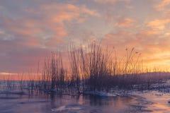 草剪影在一个冻湖 库存图片