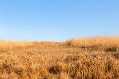 草原冬天蓝色地形 库存图片