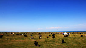 草原和天空 库存图片