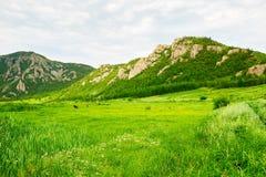 草原和小山 库存图片