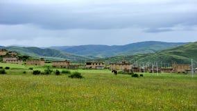草原和花在多云天空下 免版税库存图片