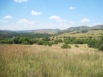 草原在与绿色灌木和遥远的小山的冬天 免版税库存图片