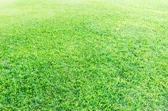 草原绿色 免版税图库摄影