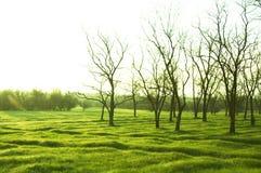 草原绿色 库存照片
