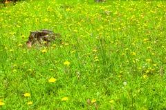 草原花和树桩 免版税库存照片