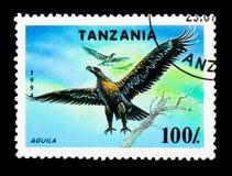草原雕(Aguila rapax),濒于灭绝的物种serie,大约1994年 库存图片