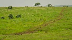 草原,树,路,方向 免版税库存照片