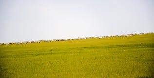 草原 库存图片