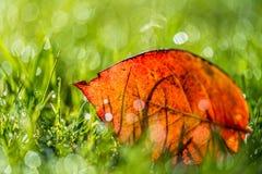 草叶与早晨光的 库存照片