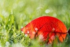草叶与早晨光的 图库摄影