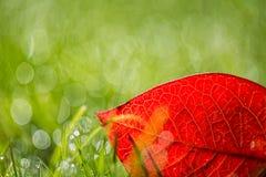 草叶与早晨光的 免版税库存图片