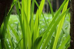 绿草叶子背景 免版税图库摄影