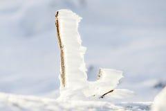 草叶覆盖与冰 免版税库存照片
