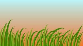 草叶,摇摆在风,美好的日出背景,3d动画 库存例证