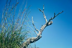 草和一个干燥分支 图库摄影