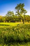 草和一棵树在Cylburn树木园在巴尔的摩,马里兰 图库摄影