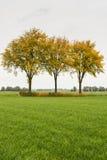 绿草和三棵被染黄的树 免版税图库摄影