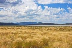 草和云彩, Eagle湖,加利福尼亚 免版税图库摄影