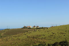 草和传统科萨人小屋,非洲风景的领域在东开普省,南非,狂放的海岸 库存照片