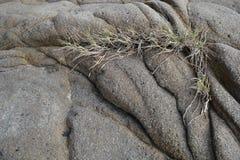 草和叶子在岩石 免版税库存照片