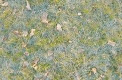 冻草和叶子 免版税库存照片