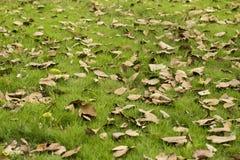 草和叶子 免版税图库摄影