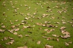 草和叶子 免版税库存照片