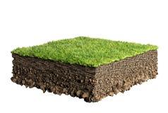 草和土壤剖面 免版税图库摄影