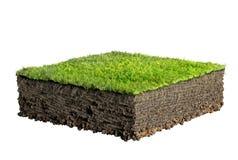 草和土壤剖面 皇族释放例证