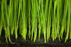 草和土壤/有机和农业背景 库存图片