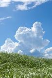 草和夏天thunderhead 库存照片