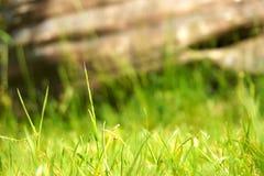 绿草和大岩石背景 库存照片