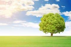 草和大树风景  免版税库存照片