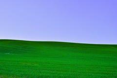 草和天空的域 库存图片