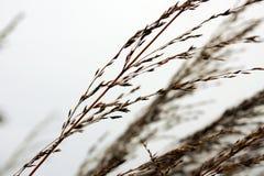 草和天空 宏指令 免版税库存照片