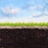 草和天空 库存图片