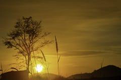 草和太阳的模糊的背景影像早晨 库存照片