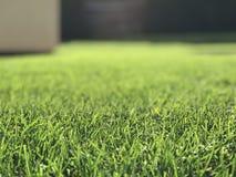 草和对象在背景中 免版税库存图片