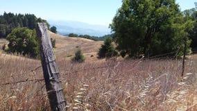 草和小山在山上面 库存图片