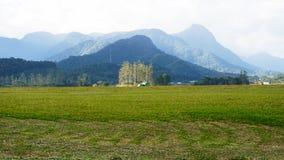 绿草和山风景 库存照片