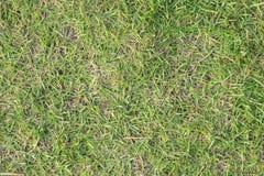 绿草和干草 免版税库存图片